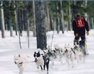 Casper Dog Sled Races